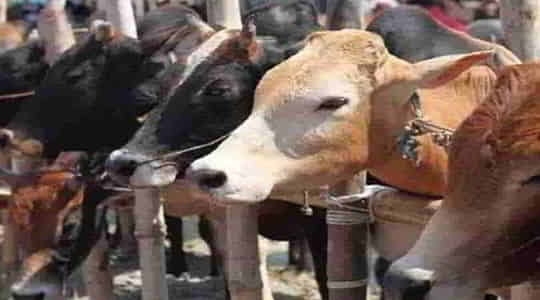 1172792675Two-people-were-arrested-in-Jharkhand-and-five-quintals-500-lb-of-beef-were-recovered.jpg