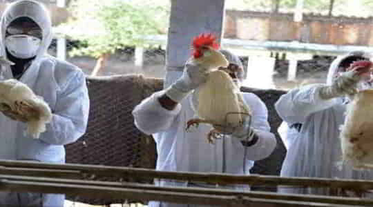 1602535946first-case-of-human-infection-with-h5n8-bird-flu-in-russia.jpg